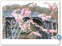 Tree beside  the Iron Bridge over the river severn at Ironbridge